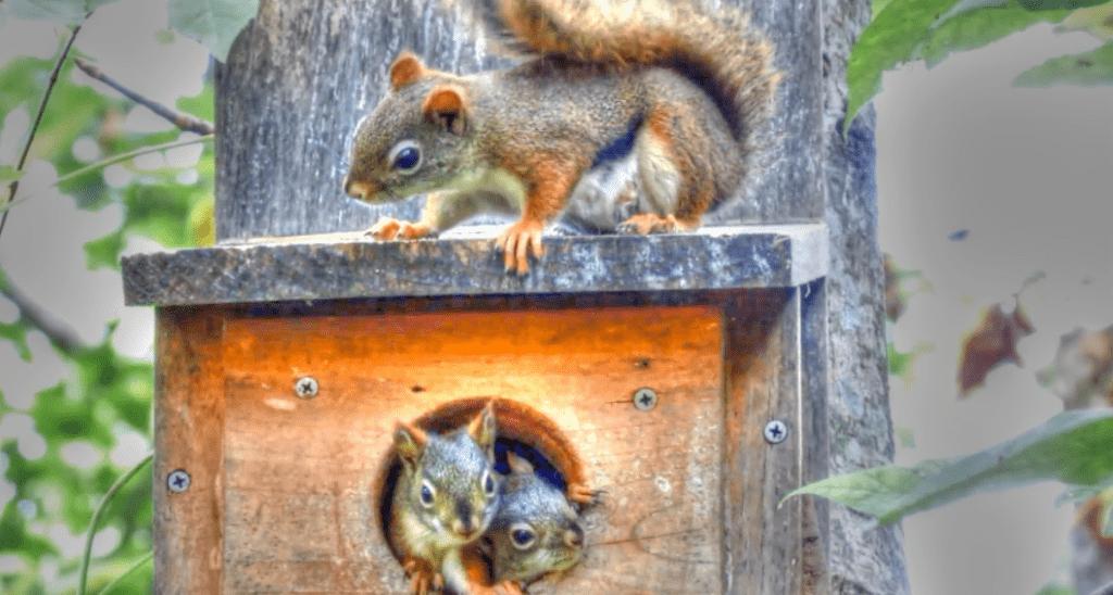 eekhoorn nestkastjes zelf maken