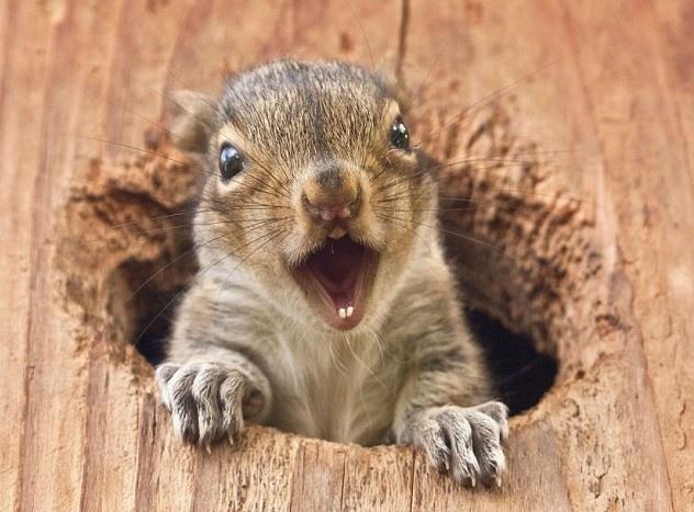 eekhoorn voederhuisjes maken